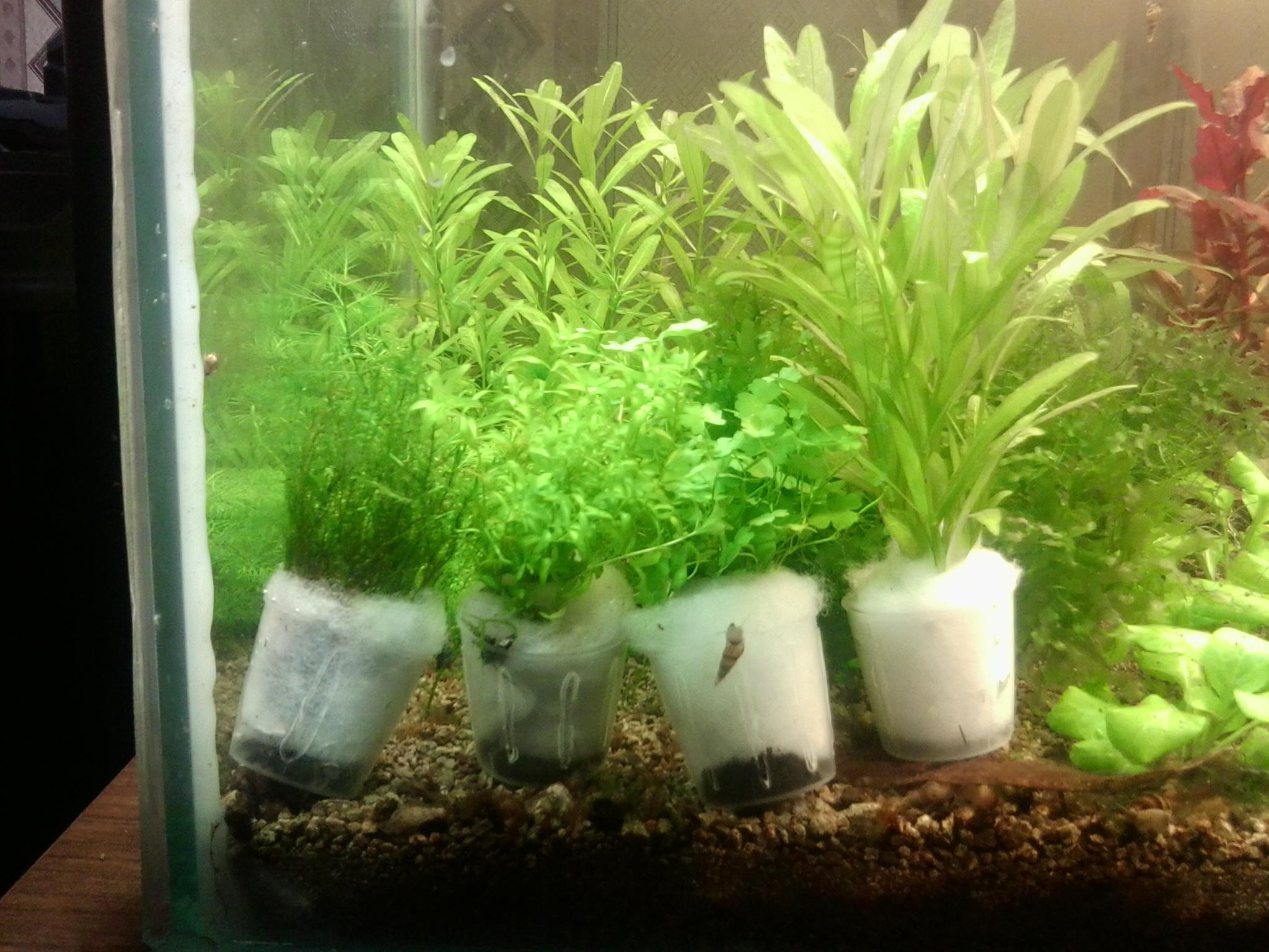 Посадка растений аквариум, правильная посадка аквариумных 54